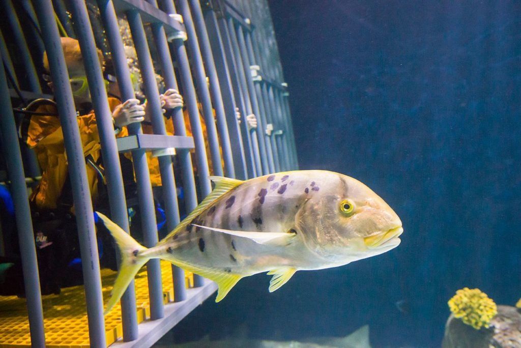 People in cage underwater watch fish