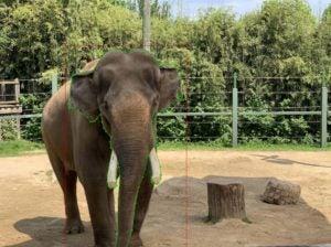 elephant with facial cutout
