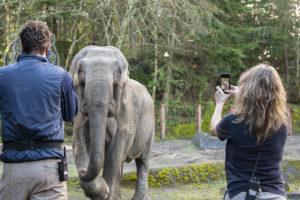 two keepers photographing elephant