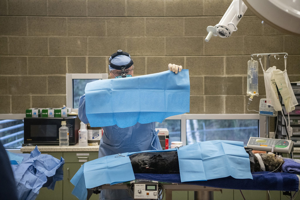 sea otter surgery laying drapes