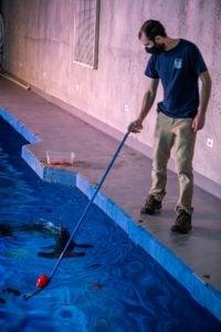 Staff Biologist Tyler feeds the hammerhead sharks behind-the-scenes in the Pacific Seas Aquarium