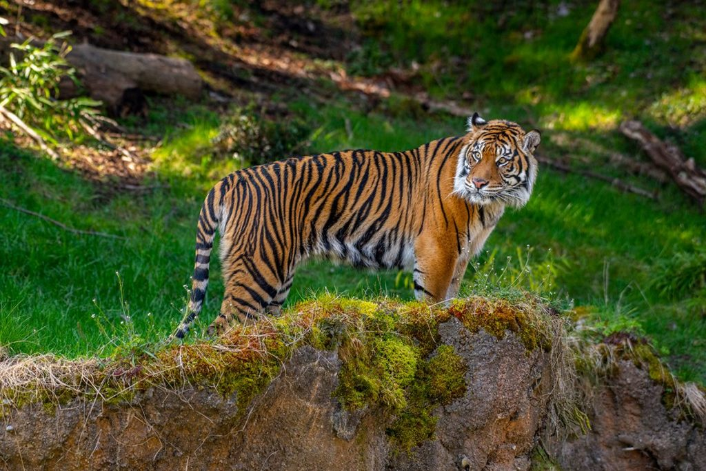 Indah stands in Asian Forest Sanctuary exhibit