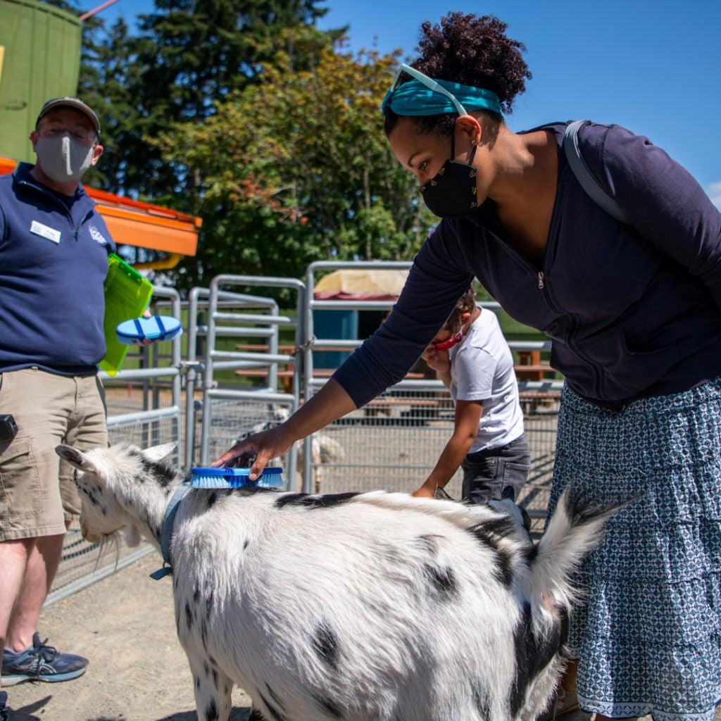 woman pets goat