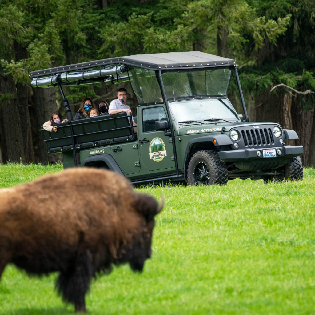 family in jeep sees bison