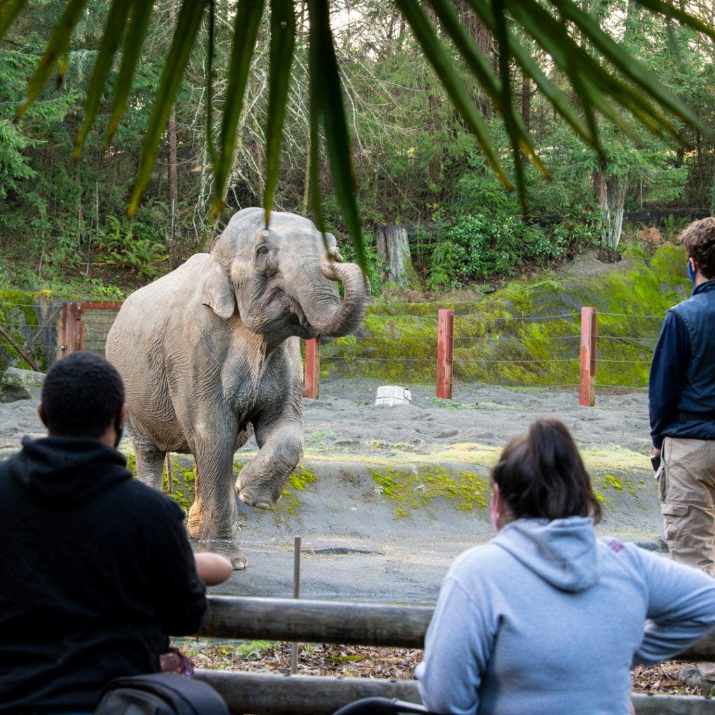 people watch elephant