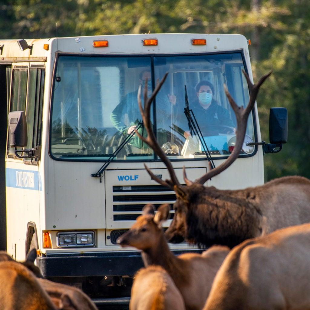 photo tour at Northwest Trek