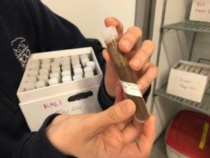 fecal test tube