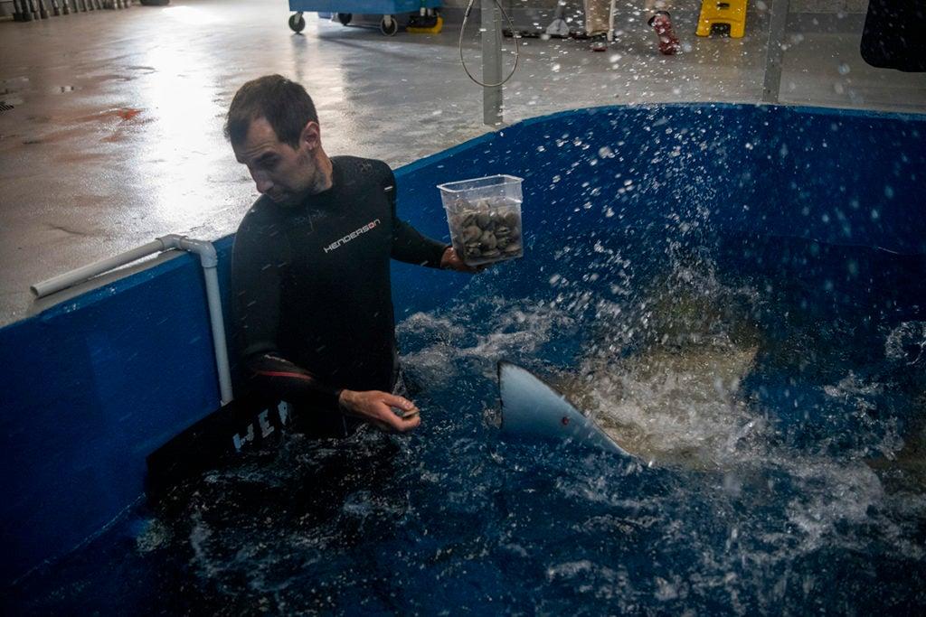 aquarist Tyler splashed by eagle rays