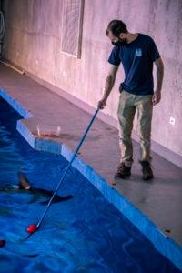 aquarist Tyler target feed shark