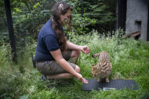 keeper Jessie training serval