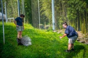 keeper Sam trains Whitie porcupine