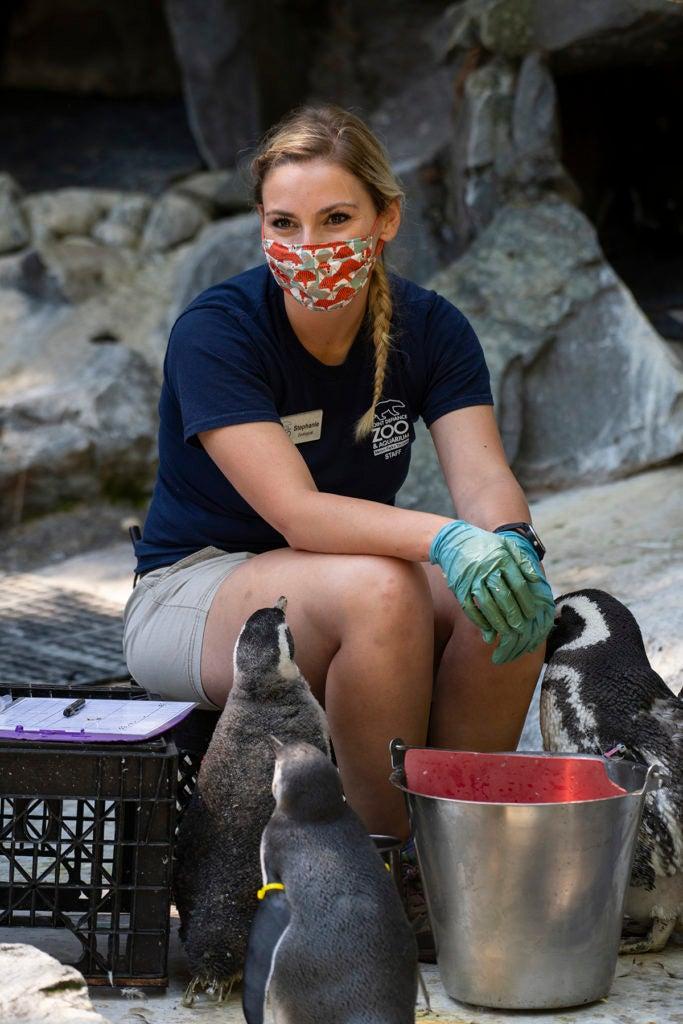 keeper Stephanie feeding penguins