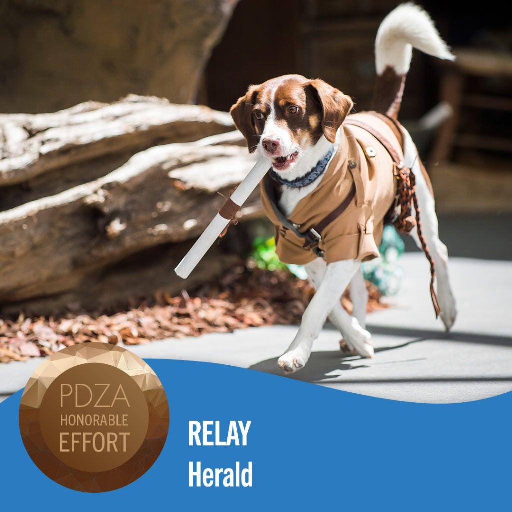 relay dog