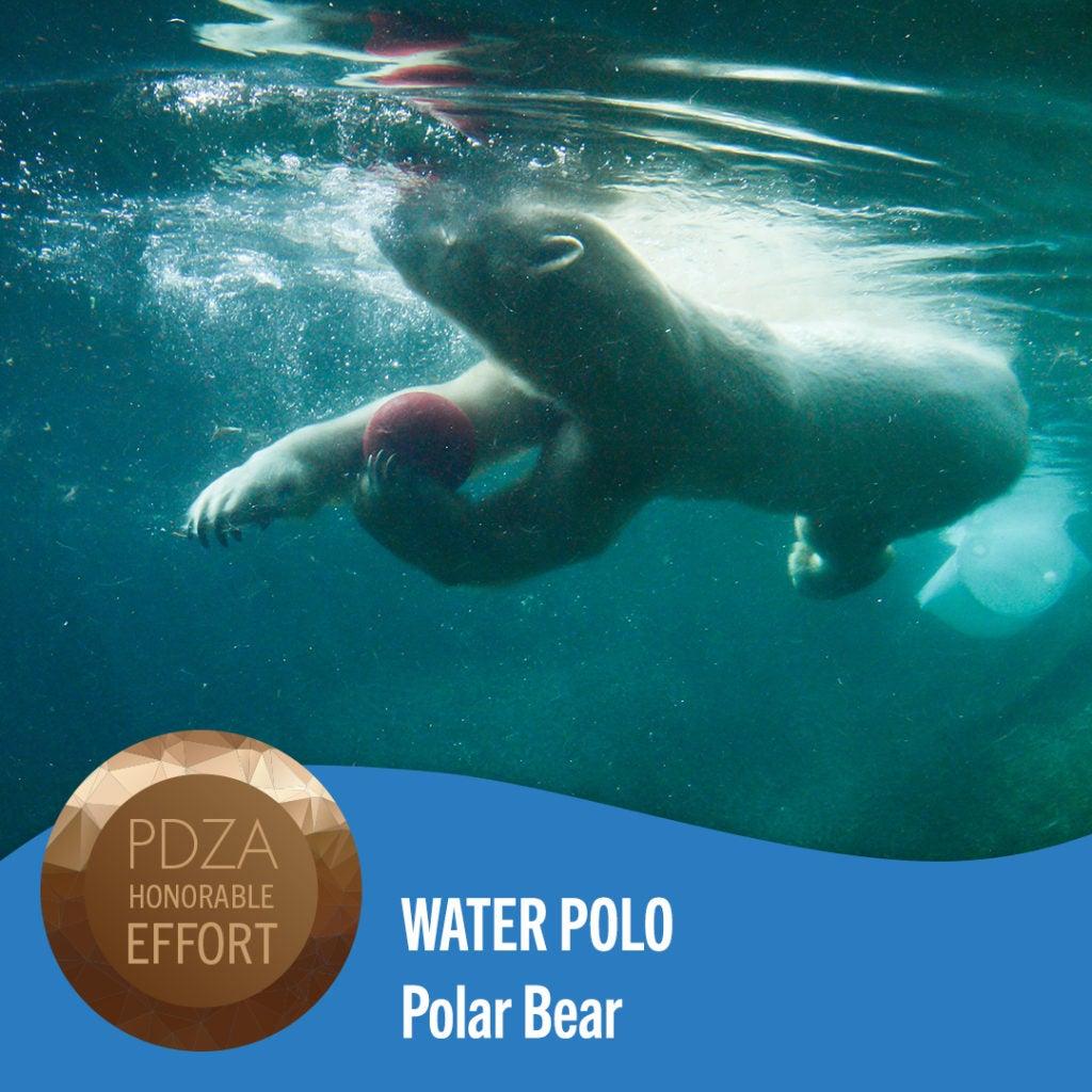 water polo polar bear