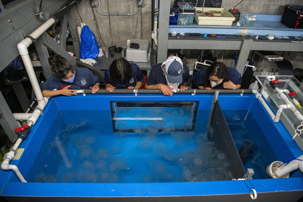 jellyfish team