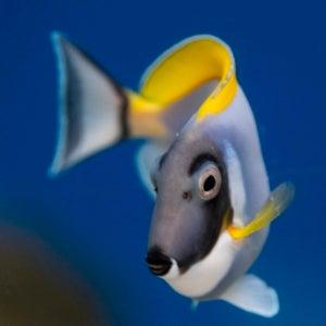 thin fish