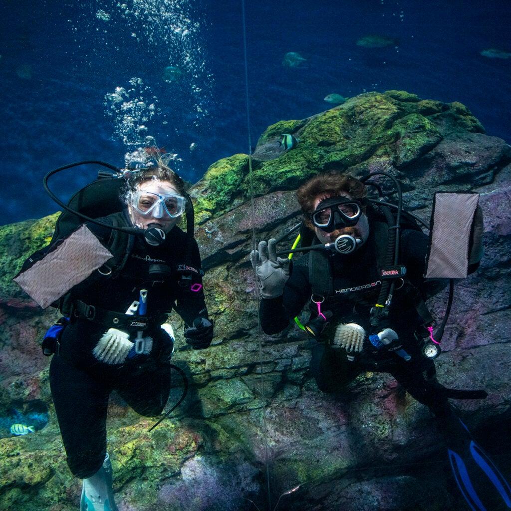 two divers in aquarium